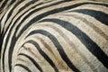 Zebra fur texture Royalty Free Stock Photo