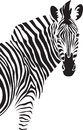 Zebra. Illustration.