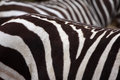 Zebra interesting striped mammal from south Royalty Free Stock Images