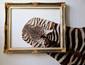 Zebra leather used home decoration Royalty Free Stock Photography