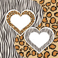 Zebra and leopard contrasts animal patterns beloved hearts with form for your text or images vector illustration Stock Photo