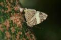 Zebra Mosaic Butterfly Royalty Free Stock Photos