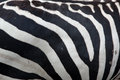 Zebra pattern Stock Images
