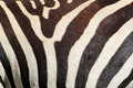Zebra pattern closeup of stripes of a equus quagga Stock Photo