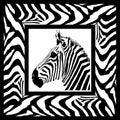 Zebra pattern frame Royalty Free Stock Photo