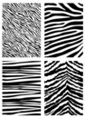 Zebra pattern vector Royalty Free Stock Image