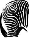 Zebra Rump Stock Photos
