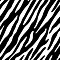 Zebra (seamless wallpaper) Royalty Free Stock Photo