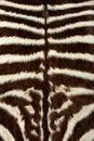 Zebra skin Royalty Free Stock Photo