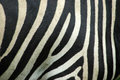 Zebra skin Royalty Free Stock Photo