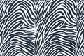 Zebra skin background Stock Photo