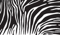 Zebra skin background animal print texture seamless pattern Royalty Free Stock Photography