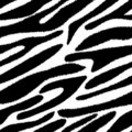 Zebra skin seamless pattern. Royalty Free Stock Image