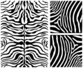Zebra skin set Royalty Free Stock Photography