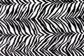 Zebra stripe background Stock Photo