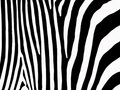 Zebra stripes background Stock Photo