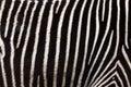 Zebra stripes closeup of a s Royalty Free Stock Image