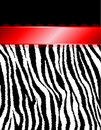 Zebra Stripes & Red Ribbon Royalty Free Stock Image