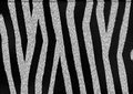 Zebra stripes the texture and pattern of skin and fur with black and white Royalty Free Stock Image