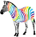 Zebra. Strips of different colors. Stock Photos