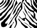 Zebra texture Black and White Royalty Free Stock Photography