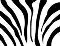 Zebra texture Black and White Royalty Free Stock Photos