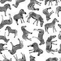 Zebra vector hand drawn graphic illustration seamless pattern on white background