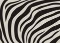 Zebra veins