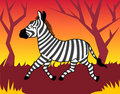 Zebra in wood Stock Photo