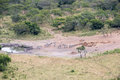 Zebras and Eland Antelopes at the Waterhole Stock Photography