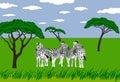 Zebras in grassland Royalty Free Stock Photo