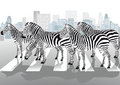 Zebras on pedestrian crossing herd of zebra with city skyline in background Stock Images