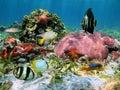 Zeester en koralen Stock Afbeelding