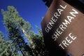 Zeichen für general sherman tree mammutbaum nationalpark kalifornien Stockbilder