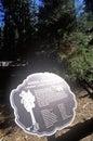 Zeichen für general sherman tree mammutbaum nationalpark kalifornien Stockbild