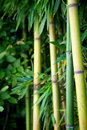 Zen bamboo Stock Photos