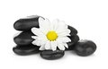 Zen basalt stones and daisy isolated on white see my other works in portfolio Royalty Free Stock Photo