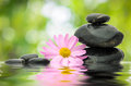 Zen Flower and Stone Royalty Free Stock Photography