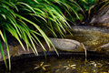 Zen pond garden detail water flow and foliage Royalty Free Stock Photo
