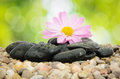 Zen Stones and Flower on Nature Stock Images