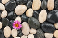 Zen stones and flower with water drops may be used as background Stock Photos