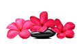 Zen stones with frangipani flower isolated on white background Stock Images