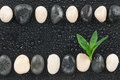 Zen stones and leaves with water drops space for text Royalty Free Stock Photo