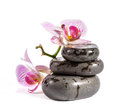 Zen stones with orchid and ladybird. Royalty Free Stock Image