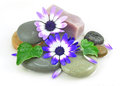 Zen Stones spa with flowers Royalty Free Stock Photo