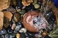 Zen Thirst Royalty Free Stock Photo