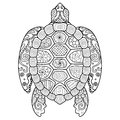 Zendoodle stylized of beautiful turtle for tattoo,T-Shirt design and coloring book for adult