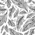 Zentangle Feather Vector Pattern