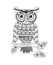 Zentangle owl black and white
