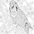 Zentangle stylized budgie parrot